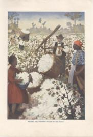Picking And Weighing Cotton In The South