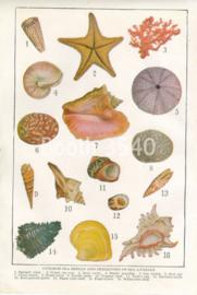 Common Sea Shells And Skeletons Of Sea Animals